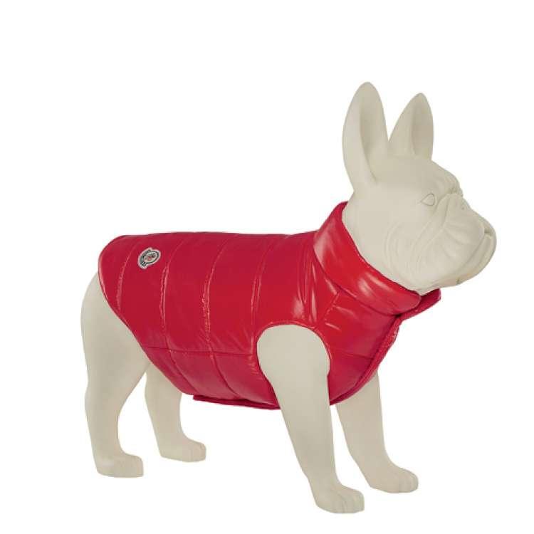 moncler jacket dog